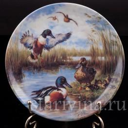 Декоративная фарфоровая тарелка Красочные утки, Ottlinger Porzellan, Германия, 1995 г.